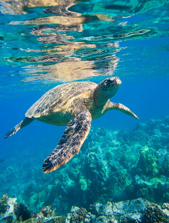 Elite Pacific's Favorite Snorkeling on the Big Island