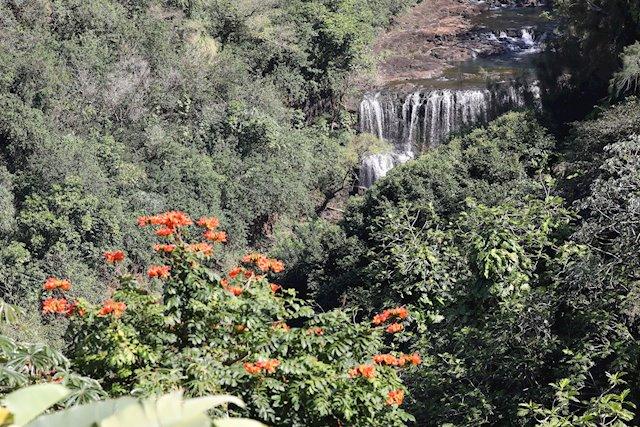 Best View of Kilauea Waterfall on Waipua Street