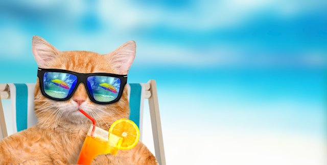 Moving Your Pet to Hawaii